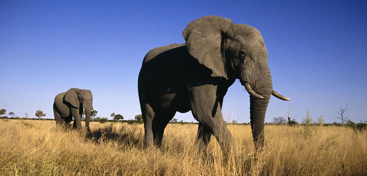 Teach in Botswana | Teach Away
